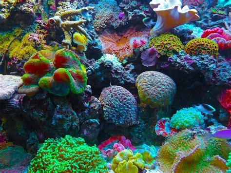 Descubrieron un arrecife de coral en el río Amazonas ...