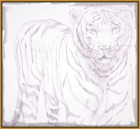 dibujos a lapiz de tigres faciles Archivos | Imagenes de ...