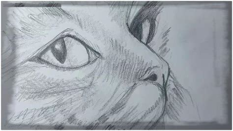 dibujos de gatos a lapiz paso a paso Archivos | Dibujos de ...