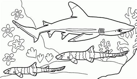 Dibujos infantiles de tiburones para colorear