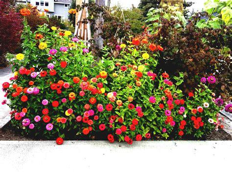 Diseño de jardines pequeños y modernos. Plantas ...