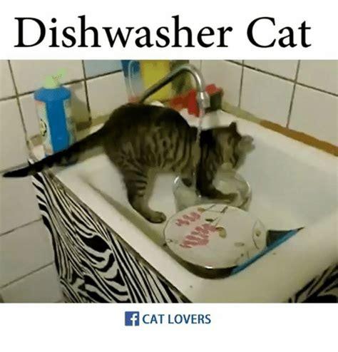 Dishwasher Cat CAT LOVERS | Meme on SIZZLE