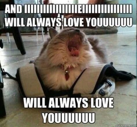 Diva cat   Meme Guy