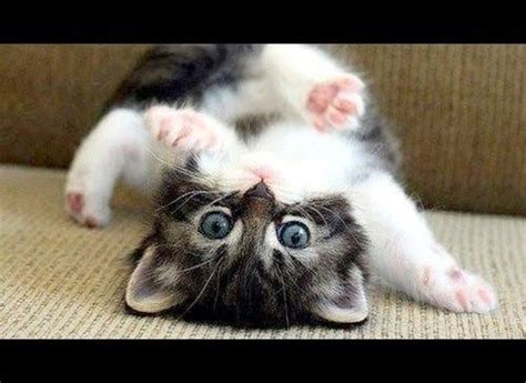 Do These Hilarious Cats Have A Sense Of Humour?