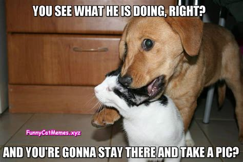 Dog And Cat Memes Funny