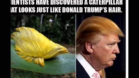 Donald Trump best funny memes 2016   YouTube