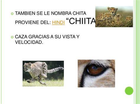 El guepardo y el ambiente donde vive