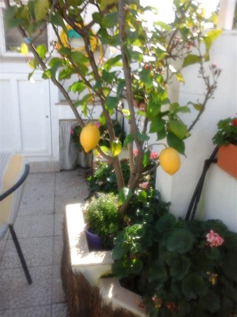 Entre patios y plantas: Como hacer un patio Cordobés
