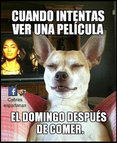 Esas tardes de domingo … | Animales humor | Pinterest ...