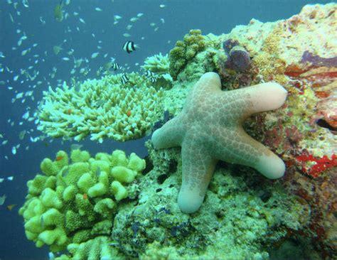 Este año habrían muerto más corales que nunca   Quo