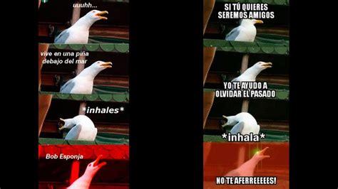 Facebook: Este es el origen del meme de la gaviota que es ...