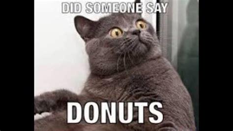 Fat Cat Memes   Slideshow   YouTube