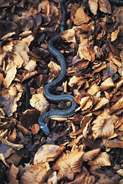 Fauna   Magura National Park