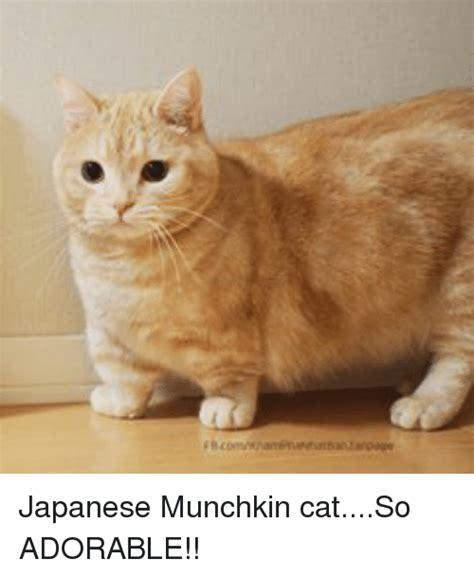 FBcomKhamphaNhat Ban Fanpage Japanese Munchkin catSo ...