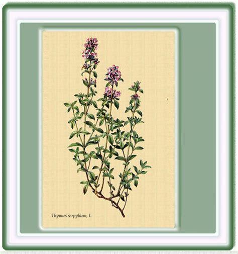 . Fichas de plantas con sus propiedades medicinales