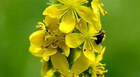 . Fichas de plantas para remedios medicinales: hierbas ...