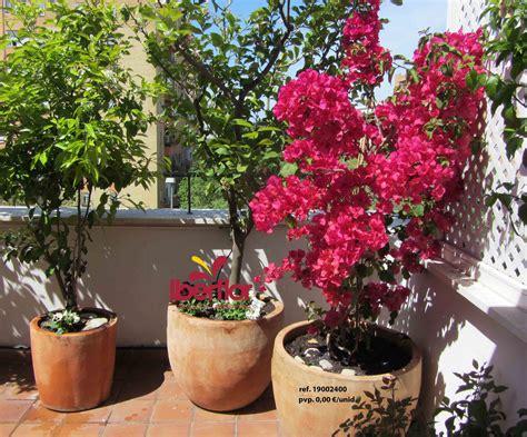 Flores y Plantas   Jardinería Sevilla   Envío en Sevilla