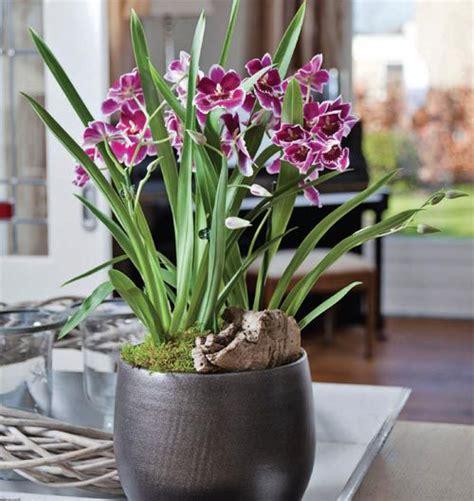 Flori de apartament   sfaturi de îngrijire a celor mai ...