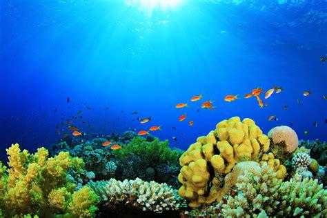 fondos 3d para acuarios en movimiento para tu pc | Fondos ...