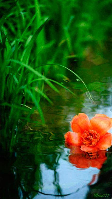 Fondos De Pantalla Con Flores En Movimiento | Imágenes Gif ...