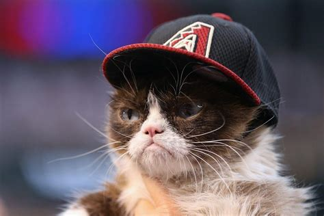 Forbes Top Influencers: Grumpy Cat, The Internet s ...