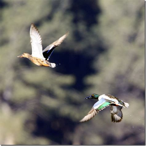 Fotos de animales bajo licencia creative commons – DigiZen ...