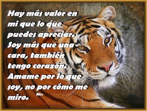 frases celebres con tigres Archivos | Fotos de Tigres