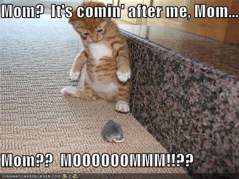 free funny photoS: funny kitten  09.11.2012