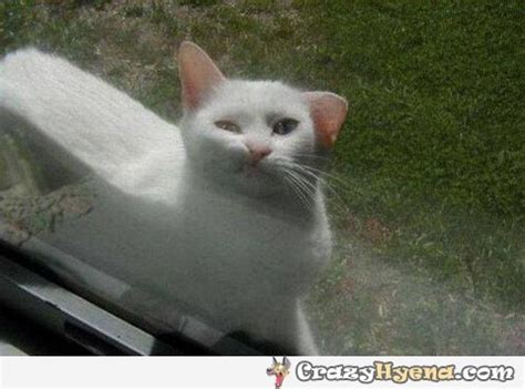 Funniest cat ever. Let me in.