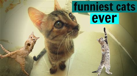 Funniest Cat Picture Ever | www.imgkid.com   The Image Kid ...