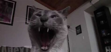 Funniest Cat Video to Ever Exist « Cats