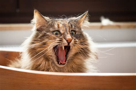 Funniest Cats In The World   Presented by BestieAwards