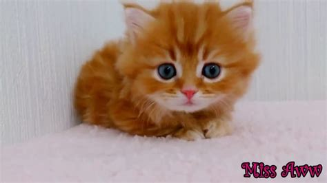 Funny Animal Videos for Kids Cute Kitten Compilation ...