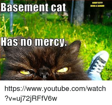 Funny Basement Cat Memes of 2017 on SIZZLE | Cats