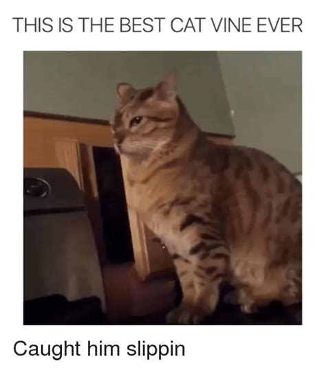 Funny Best Cat Memes of 2017 on SIZZLE | Cars
