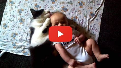 Funny Cat Cleans Baby   Funny Cats Videos