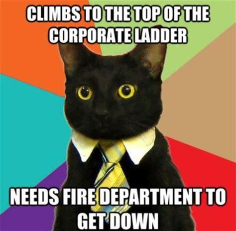 funny cat meme   Dump A Day