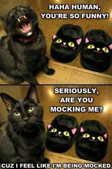 Funny cat meme lol