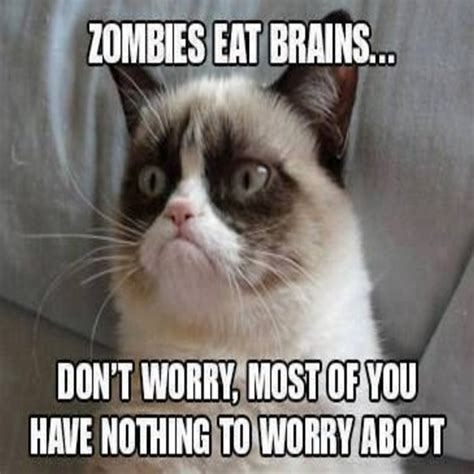 Funny Cat Memes   40 Hilarious Pictures!   Page 3