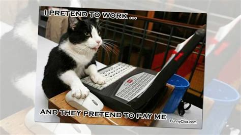 Funny Cat Memes About Work   YouTube