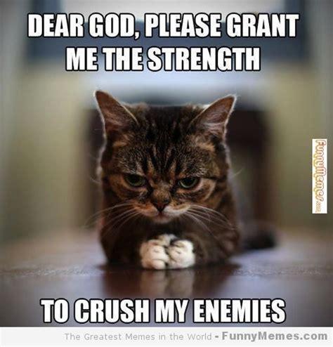 funny cat memes | Cat memes   [Please grant me the ...