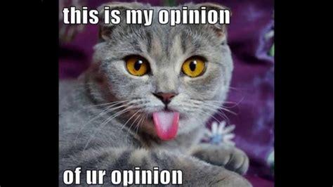 Funny Cat Memes   The Best Funny Cat Memes   Slapwank