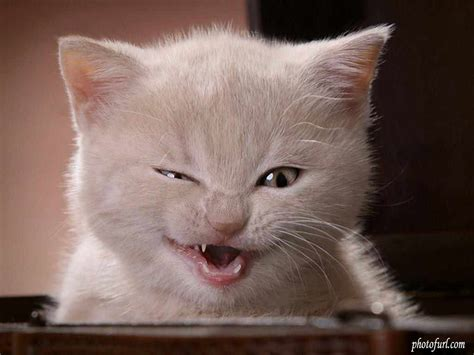 Funny cat s ~ Funny images and Jokes