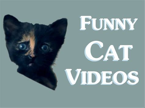 Funny Cat Videos  Clean  New 2014   Funny clean cat video ...