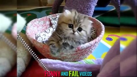 Funny Cat Videos Ever | #1   YouTube