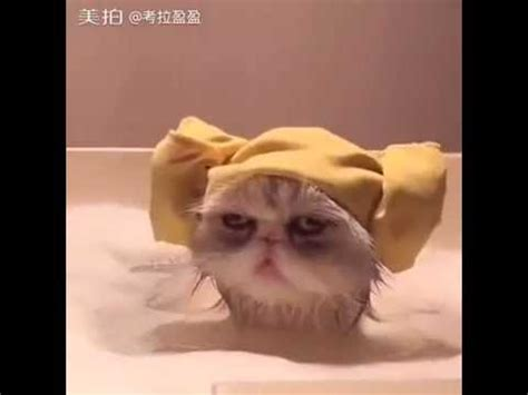 Funny cat videos for kids: Cat Bath so funny   Funny cat ...