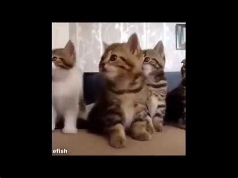 funny cat videos for kids   YouTube