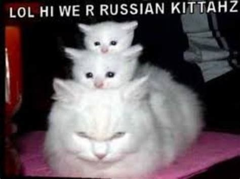 Funny cat videos on youtube