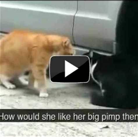 funny cat videos youtube |Daily Pictures