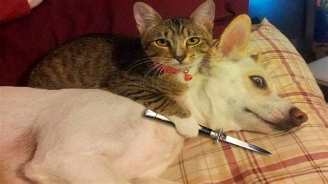 Funny Cats And Dogs Part 6   Funny Cats vs Dogs   Funny ...